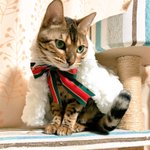 ジャンヌダルクオルタサンタリリィ風猫最高に可愛い超可愛いちょっとやばい可愛いじゃんッッッッッべーーー…