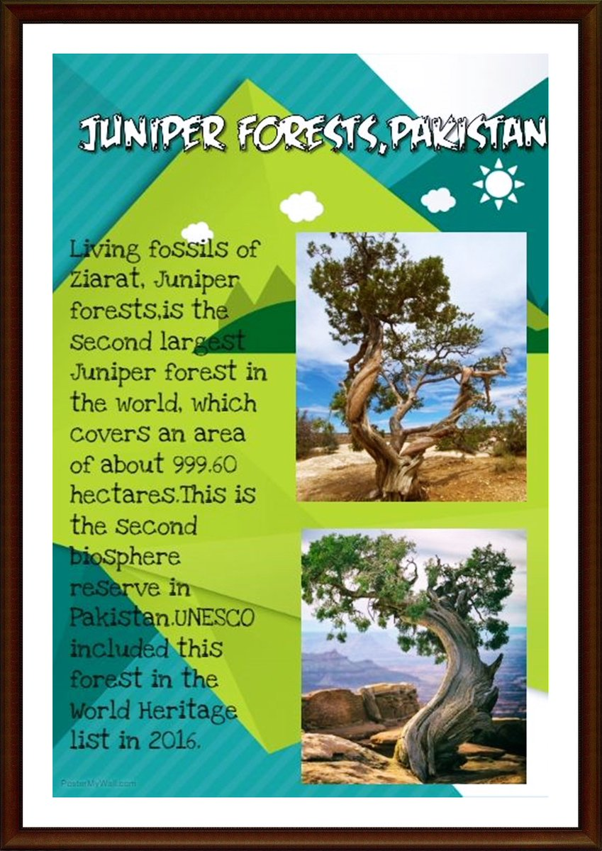 #Pakistan has the second largest #Juniper forest in the #world covering an area of about 999.60 hectares. This is also second #biosphere reserve in Pakistan. Living fossils of Juniper #Forests are found in Ziarat,Zarghoon Mountains and some other mountainous areas of #Balochistan<br>http://pic.twitter.com/Dn8YodteNh