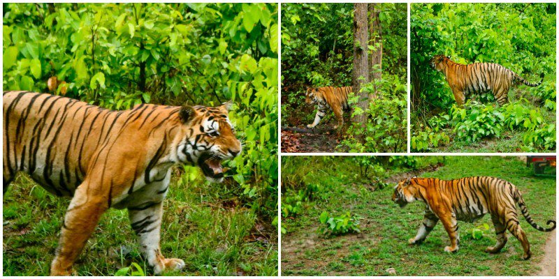 Have you booked your #Safari  ? Don&#39;t miss the opportunity to be in the jungle and experience wilderness with @TajSafaris Read my encounter with Umarpaani, popularly known as T30 HERE  https:// goo.gl/YZRSBu  &nbsp;   #Travel #ttot <br>http://pic.twitter.com/32MWjWK9GK