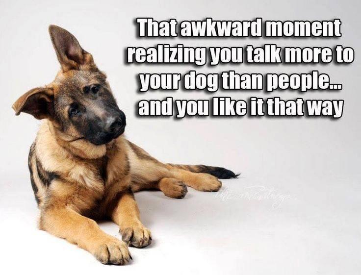RT @dogownersuk: So me..... #Dogs #DogsOfTwitter https://t.co/31Kk8oRuWr