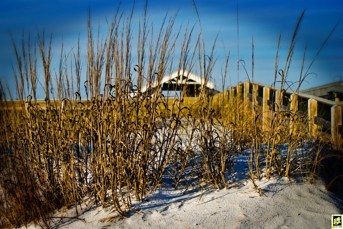 SEA OATS on Grayton Beach, FL https://t....