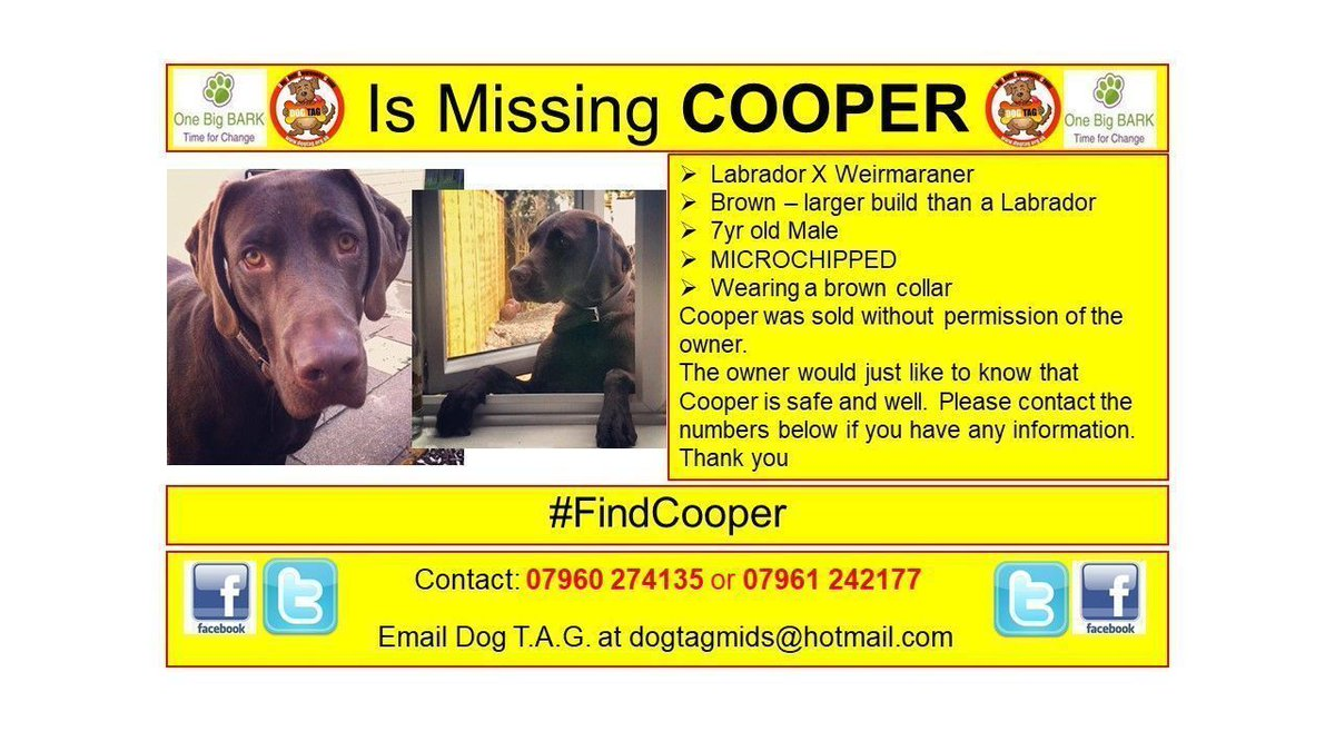 RT @DogTAGMids: #FindCooper sold without permission #Burntwood #whereareyou WE MISS YOU #scanme MICROCHIPPED https://t.co/LZpcX4E1oL