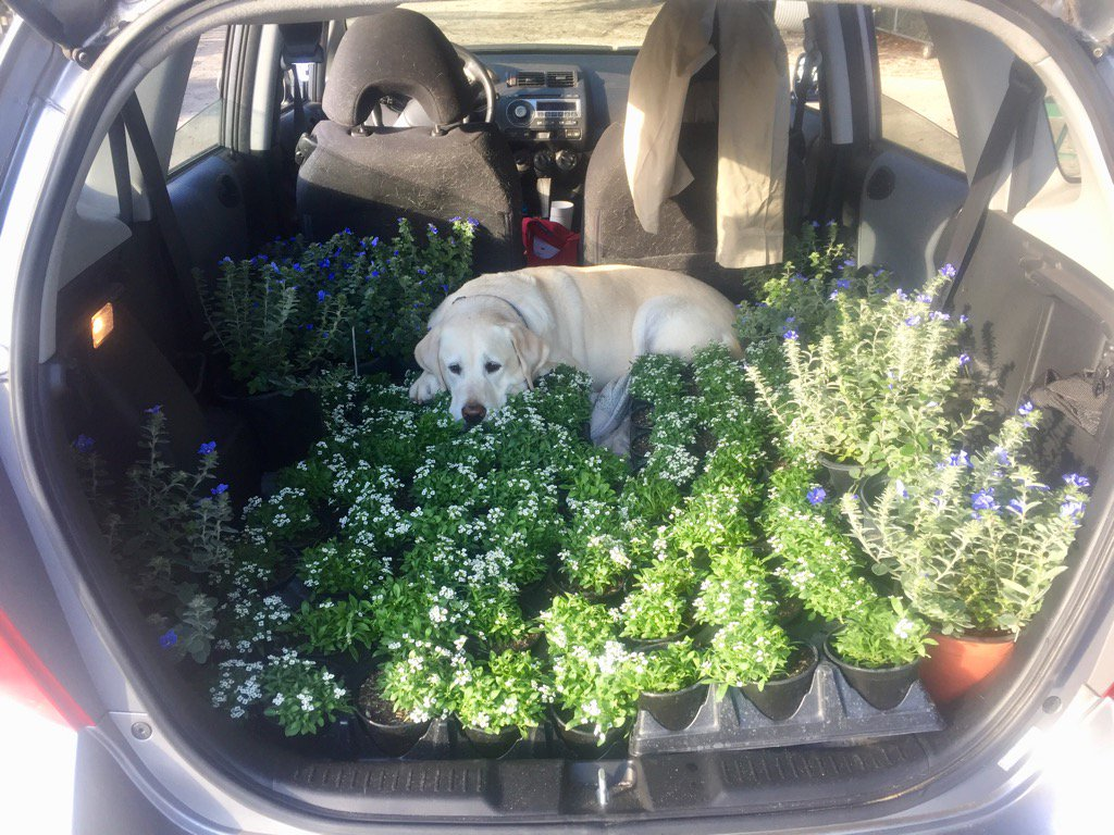 Someone was not excited about going to the nursery to pick up flowers for thanksgiving. @DogsOfTurf #flowerpower <br>http://pic.twitter.com/zoPFzX6Hf5