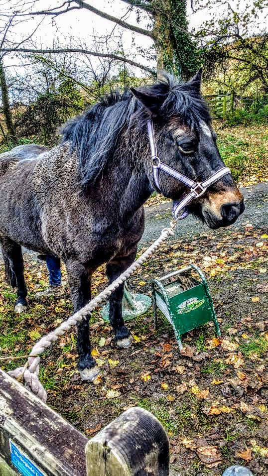 #247equestrian #horsechathour #horses #equine #newforest My latest project! Bringing Emmie back to full fitness. At the moment she&#39;s a mud monster and her tack needs some serious TLC... #elbowgrease at the ready. First set of shoes today so here&#39;s to some adventures!<br>http://pic.twitter.com/TxgXfkdyKW