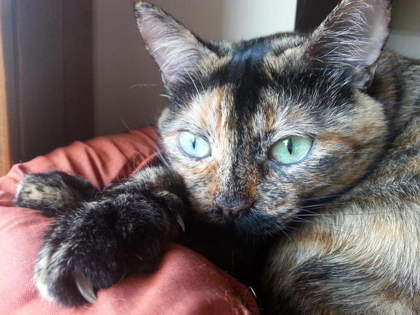In a cat&#39;s eyes, all things belong to cats. ~Old English proverb #catsoftwitter, #cats<br>http://pic.twitter.com/68wdKhnI5w