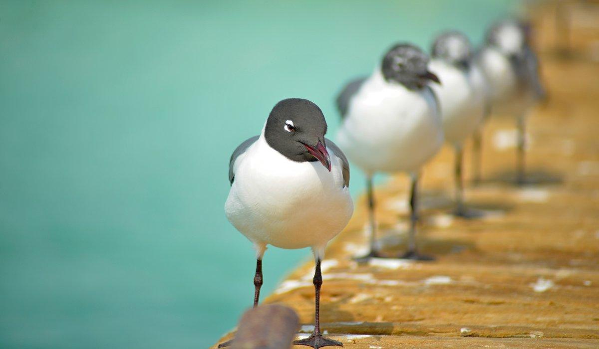Snow birds, no doubt. Looking forward to #FL #LoveFL Follow the adventure! #TravateurFL https://t.co/wtnVPUYZyp