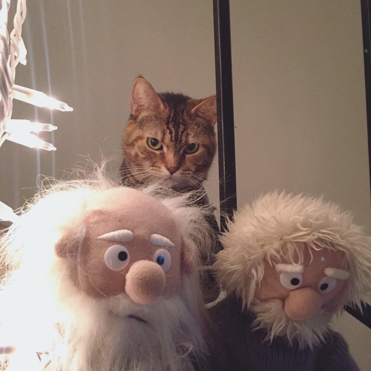 A meeting of geniuses: Charles Darwin, Albert Einstein,....Eliza Cat  #cat #CatsOfTwitter <br>http://pic.twitter.com/HX8eFqHPJL