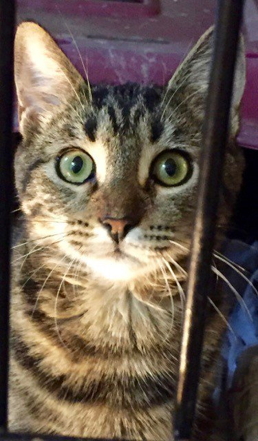 Come meet #TONI before time runs out! #catsoftwitter,#catlovers She needs your support! #Rescue   https://www. petfinder.com/petdetail/3998 2468 &nbsp; … <br>http://pic.twitter.com/DYbqvClgTf