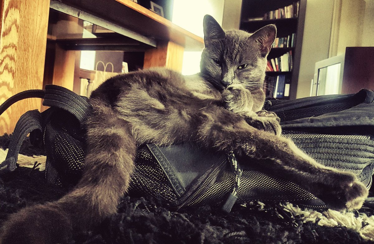 And thats no tall tail  Good morning all  Here&#39;s to back-end of the week! #ThursdayThoughts #CatsofTwitter  <br>http://pic.twitter.com/INOmzcSdeJ