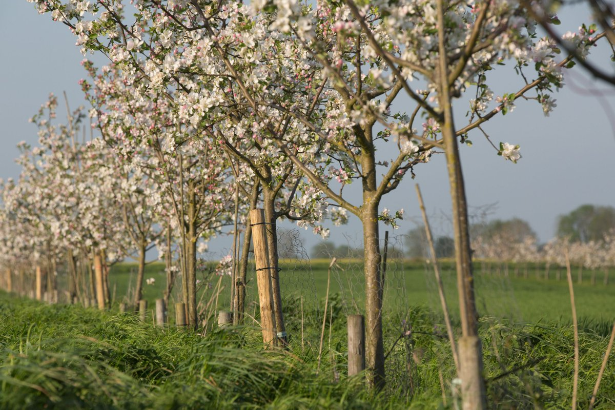 If you're looking to plant a large number of #trees on your farm or private land we can help  http://www. woodlandtru.st/Zvf8M  &nbsp;   #TreesOnFarms<br>http://pic.twitter.com/X653Iswd7n