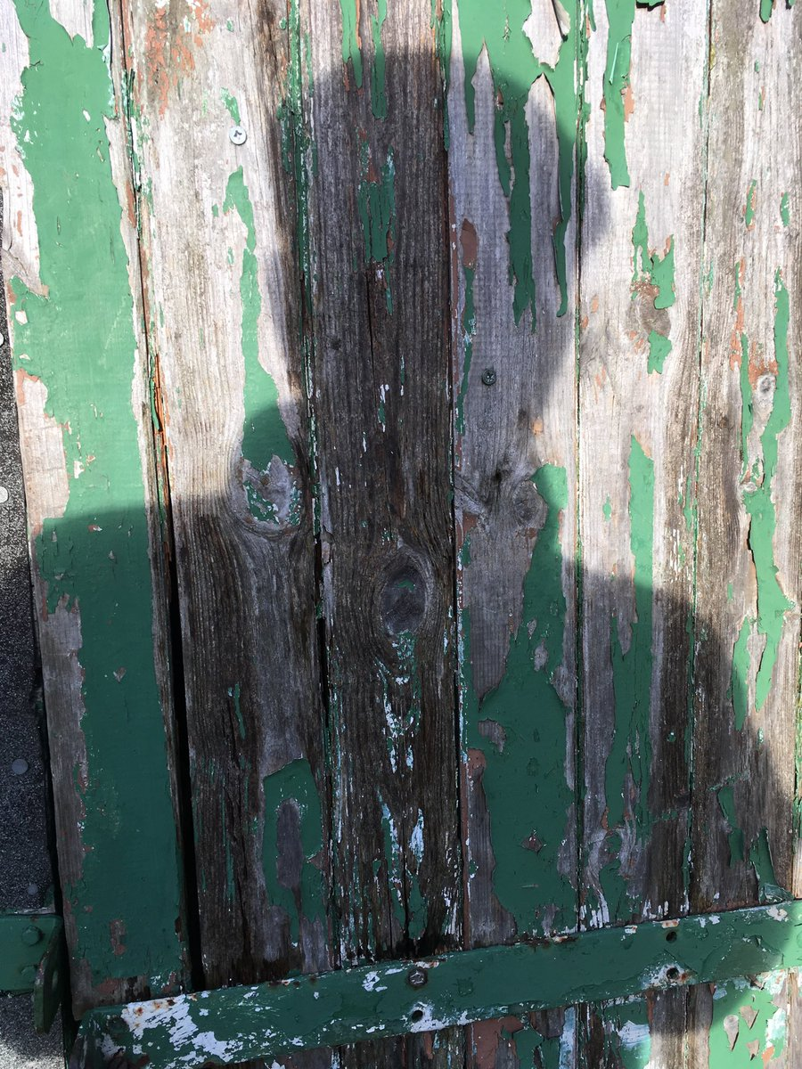 #allotment #winter #sun #shed #door #selfie - don't see that too often!<br>http://pic.twitter.com/SEQW3hHEHa