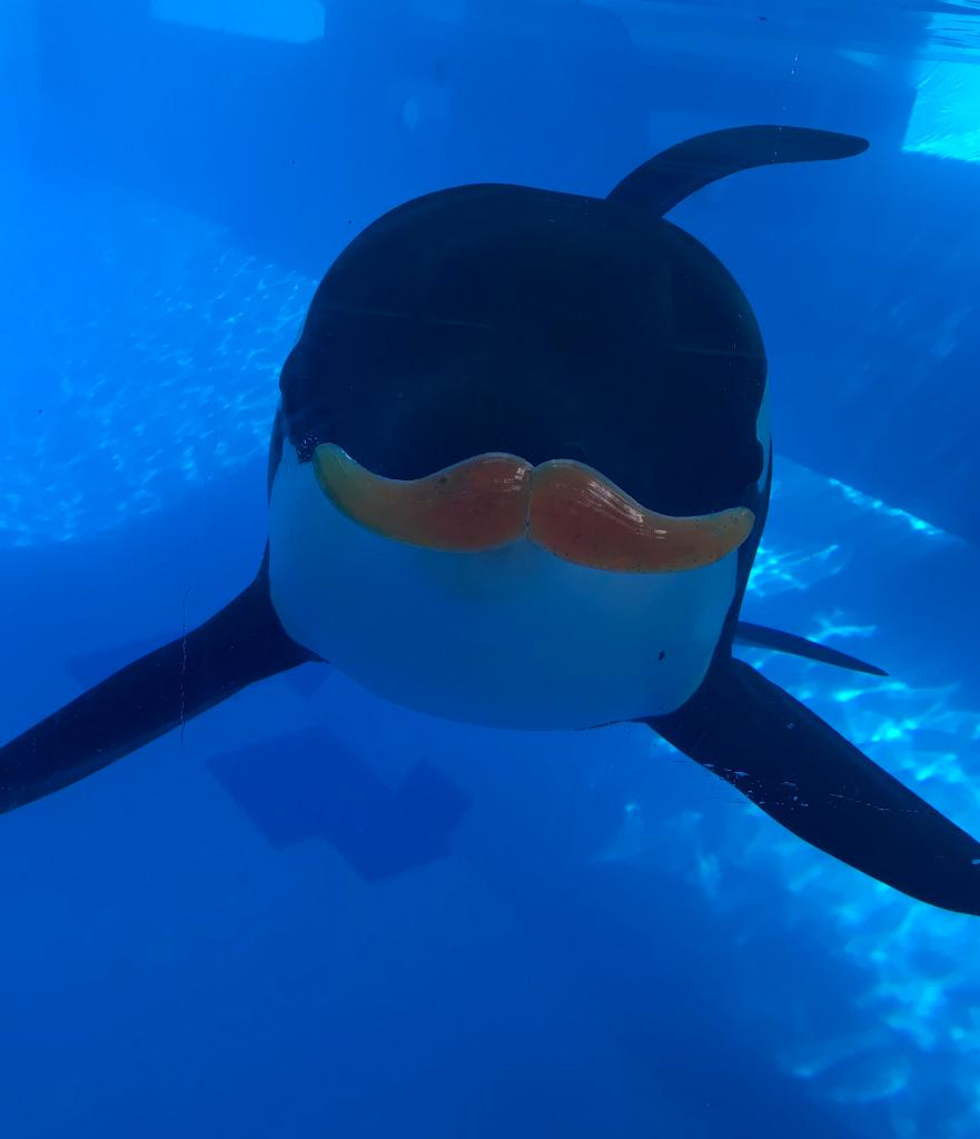 We mustache you a question ... have you seen a cuter #birthdayboy? #HappyBirthday Trua! #KillerWhale<br>http://pic.twitter.com/sP4nWqlasl