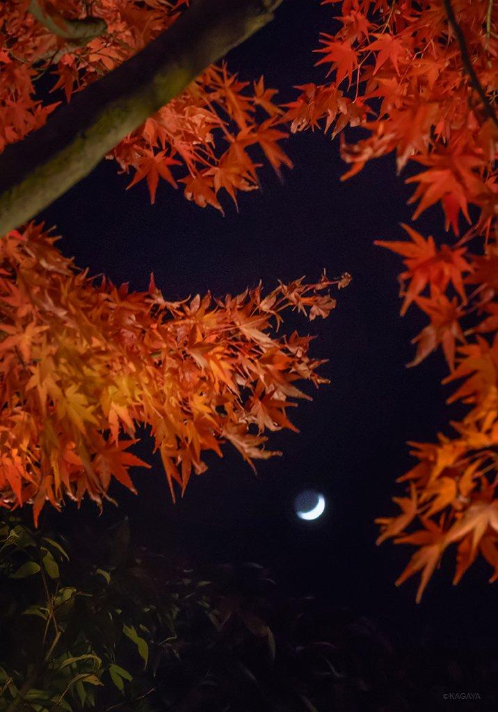 秋の宵月。(本日、京都にて撮影)今日もお疲れさまでした。明日もおだやかな一日になりますように。 pic.twitter.com/ZGy8IX6aEs