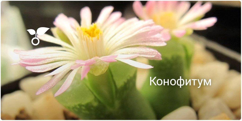 Бо�ани�ка botanichka twitter