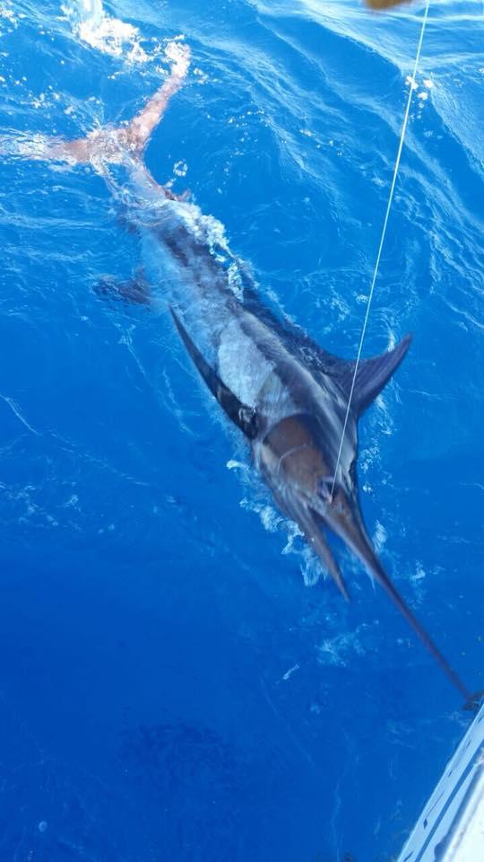 Punta Cana, DR - Lady Lola went 1-1 on Blue Marlin and 1-3 on Sailfish.