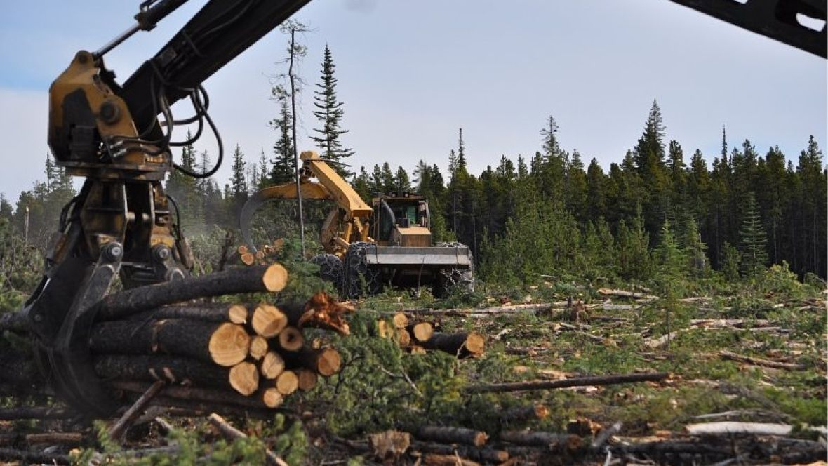 Williams Lake city councillor worries time running out to salvage B.C.'s wildfire-damaged timber https://t.co/sqMM8wb5fd