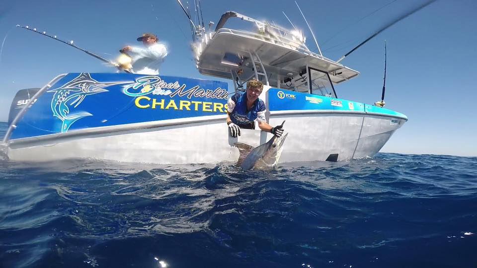 Exmouth, Aus - Black & Blue released a Black Marlin.