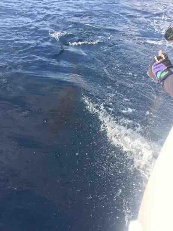 Quepos, CR - Caribsea went 1-1 on Blue Marlin.