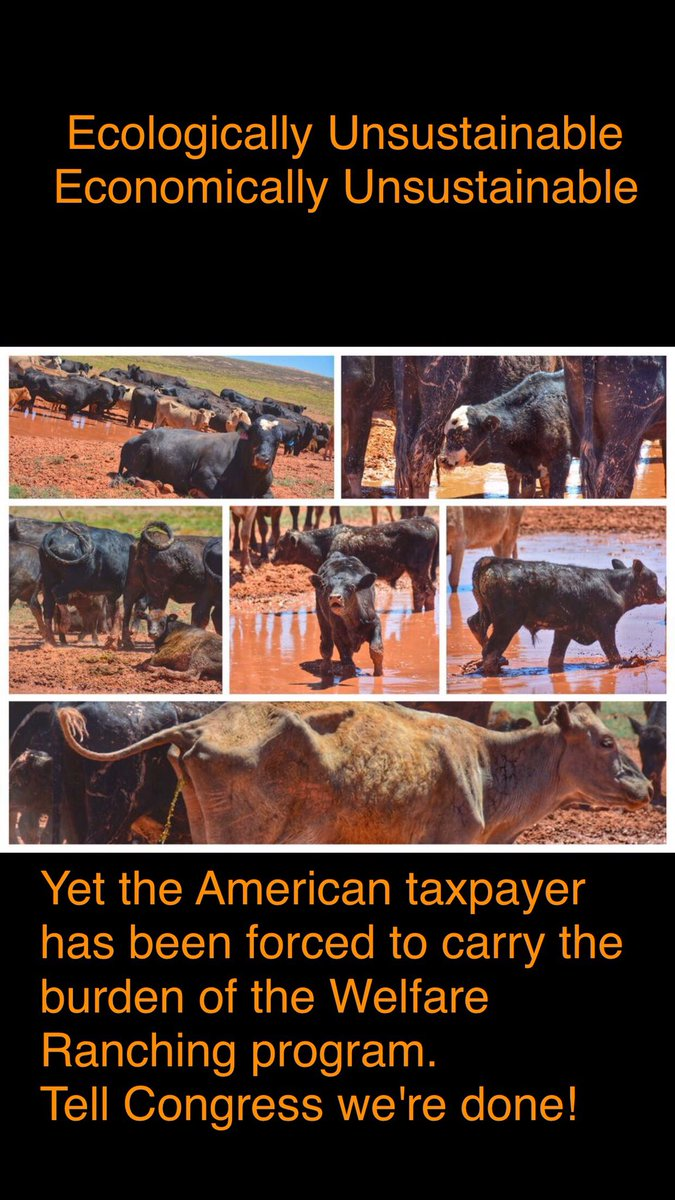 ACTION ALERT They think they own the place. But they don't. We, the American public, do. And it's time our lawmakers start buyingout/retiring the grazing permits. These ranchers r behind drive 2roundup &amp; kill #wildhorses. Pls SIGN!  https:// twitter.com/ekbmary/status /933765574131318787 &nbsp; …  @guardian<br>http://pic.twitter.com/y39cGDnj31