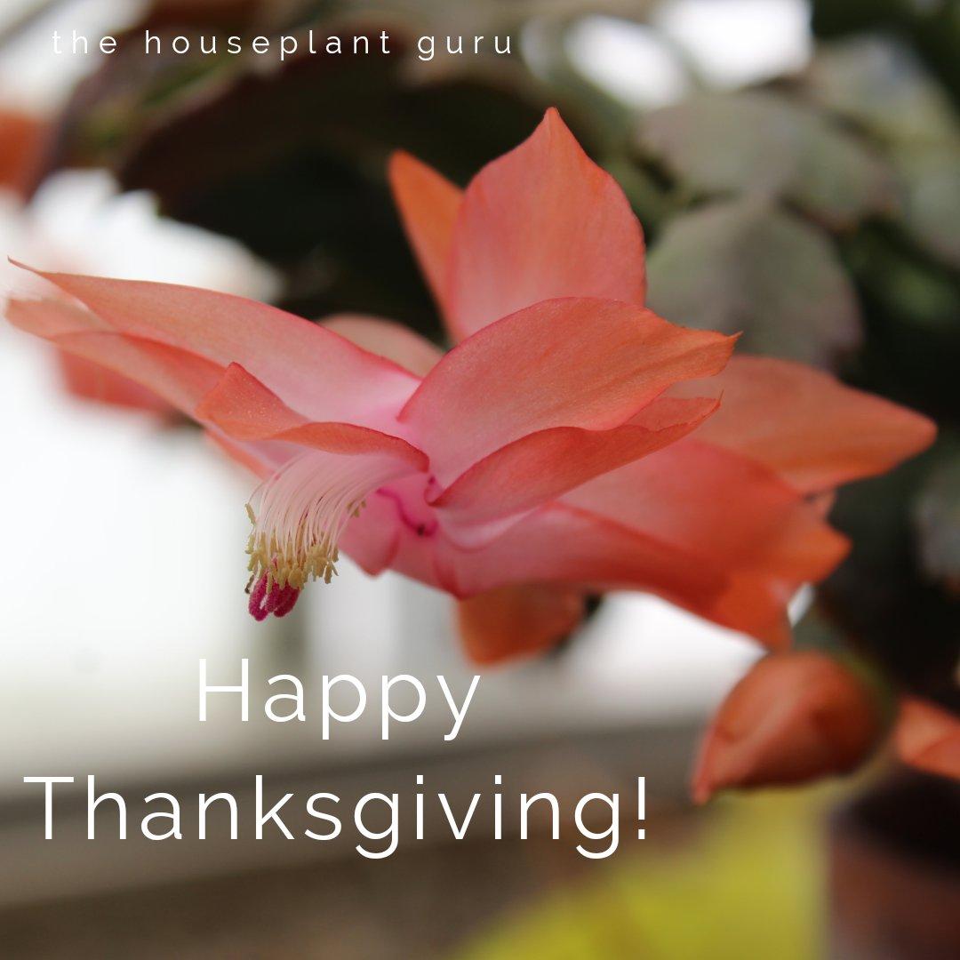Happy Thanksgiving everyone! #gardenchat @BrenHaas @SeedKeeperCo @joetree415 @billblevins @tracyblevins  @LeafBabies @rainforestflora @kwolchak @BugladySuzanne @UpShootHort @jchapstk @cookingscarlet @ElenaWill @miseriavolare @HowToNatureChat @HortErotica @mr_plantgeek<br>http://pic.twitter.com/Eelh0gQlBz