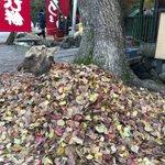 寒いですね。用事の途中で見かけましたが行きも帰りもこんな状態でした。奈良では寒いと鹿が枯葉に包まるみ…