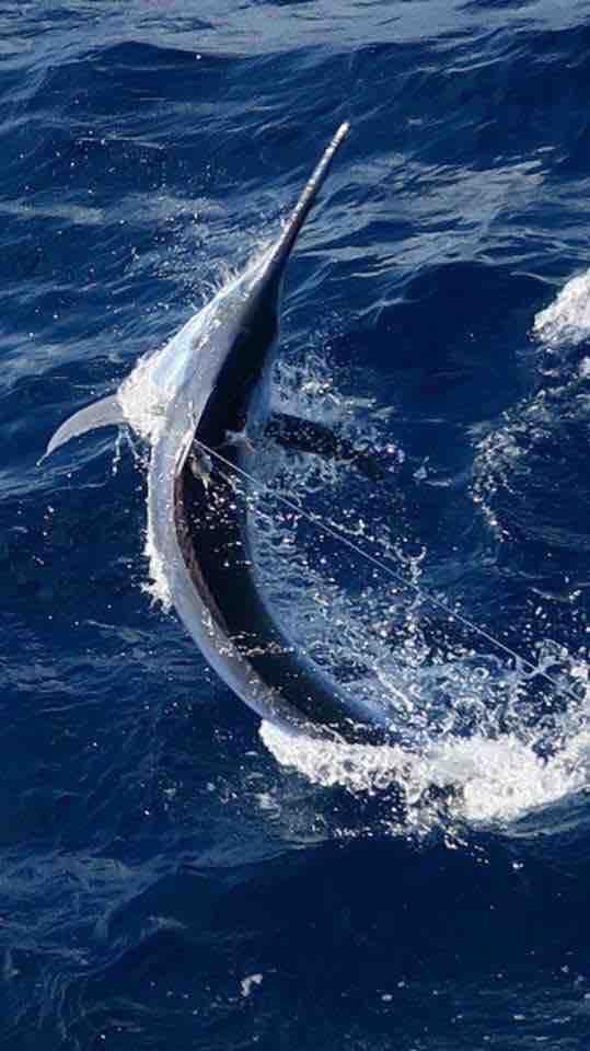 Cairns, Aus - Moana III released 2 Black Marlin.
