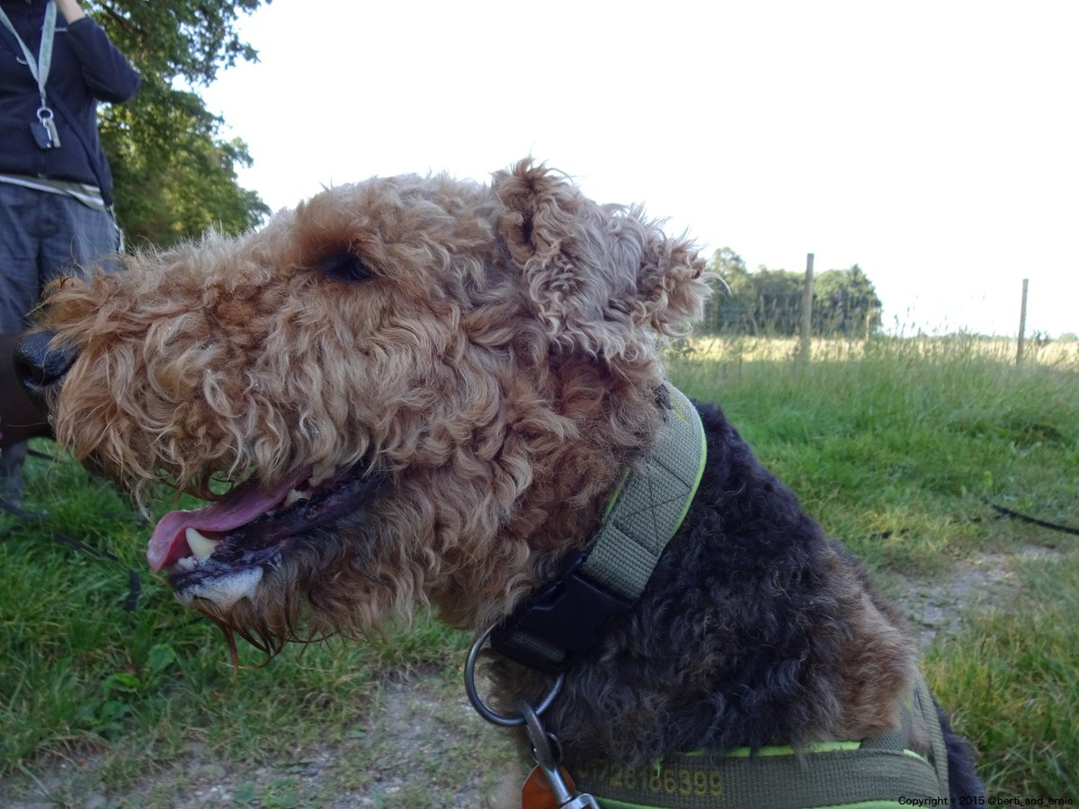 Smile with my #happy #dog. #dogsarejoy<br>http://pic.twitter.com/UNqc6Vxf5V