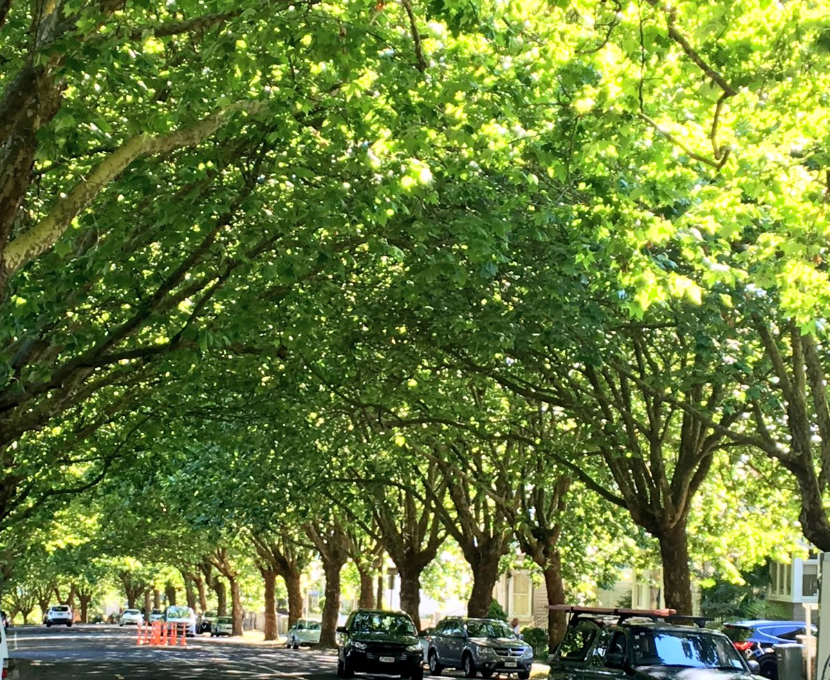 Relief. Already this year, in both morning &amp; afternoon, the benefits of street #trees make my #bike commute better. #MoreTreesPlease<br>http://pic.twitter.com/f92iQ1hfTh