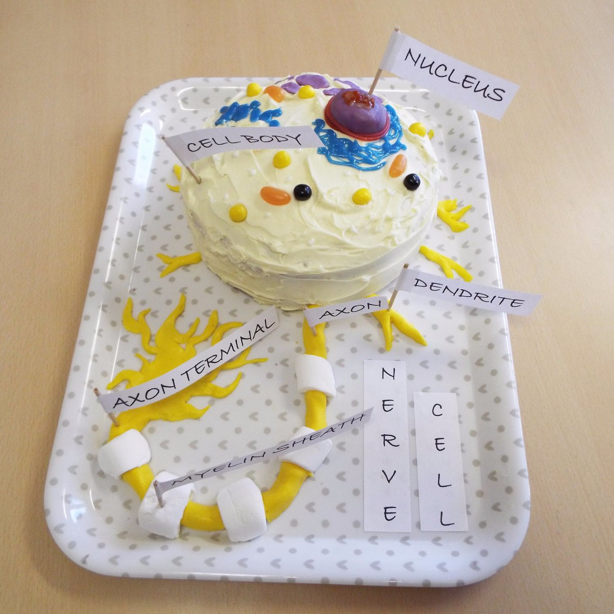 Amazing Cell Project Interframe Media Animal And Plant Diagram 3d Cells Rumney Marsh Academy Science St Thomas More Crewe On Twitter An Nerve Cake Has