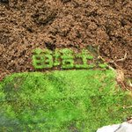 一年放置した土、中でこけむしてたんだが、文字の形にこけが生えてて息子ズのテンションがMAX pic.…