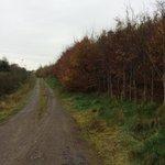 Autumnal stroll @SligoWalks