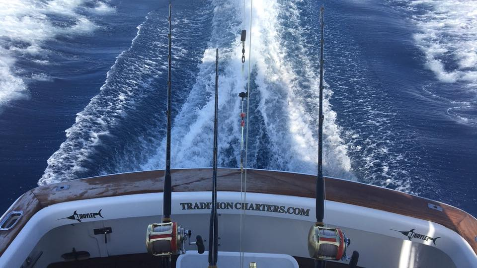 Cairns, Aus - Capt. Tim Richardson Tradition released 2 Black Marlin.