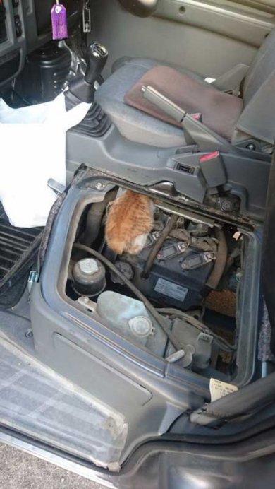 ご注意!  寒さで座席の下に入った猫ちゃんを発見! 商業車の「猫バンバン」時は座...
