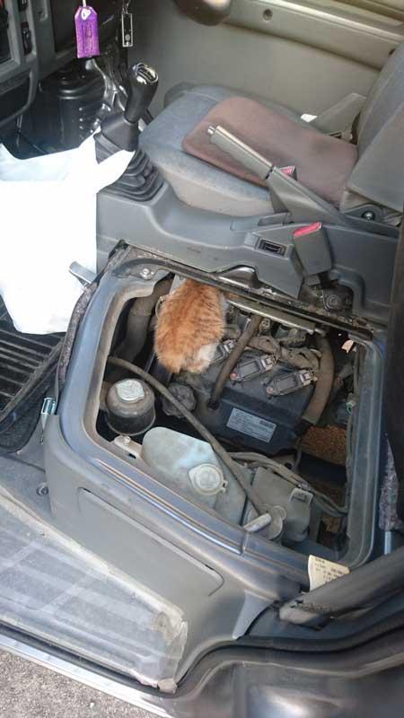 300RT 寒さで座席の下に入った猫ちゃんを発見! 商業車の「猫バンバン」時は座...
