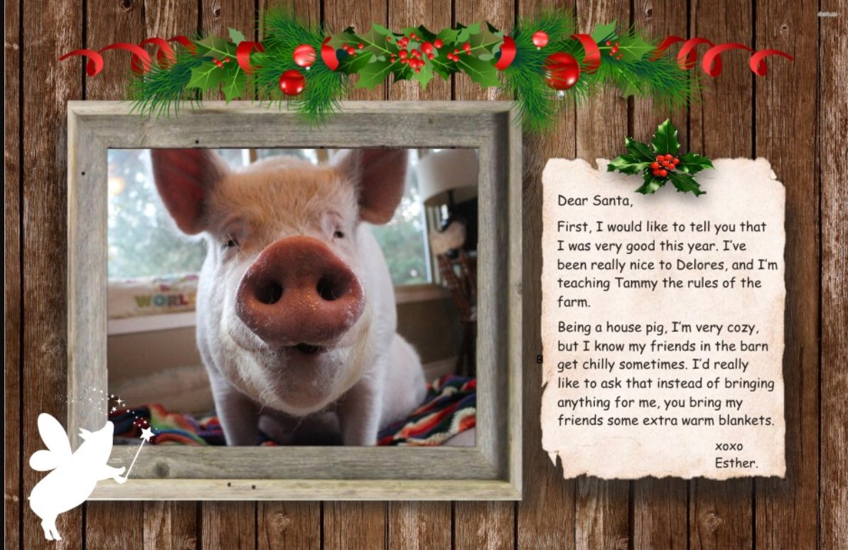 esther thewonder pig on twitter will you be my secret santa it s