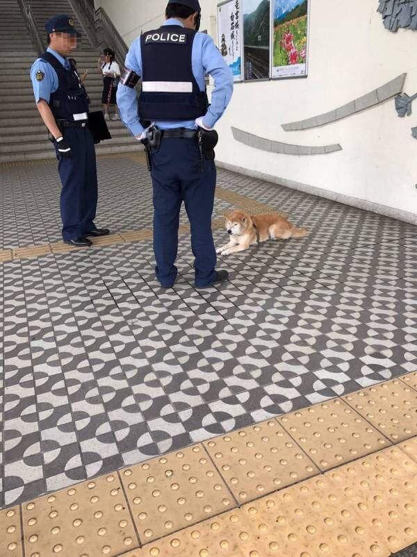 【悲報】イッヌ、現行犯逮捕wwwwww https://t.co/Y7q9nQ2...