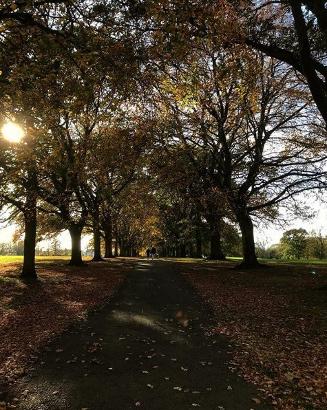 Abington Park is perfect for autumn walks through the fallen leaves. Shared by isitccawooo on Instagram #UoN #Regram #RG #AbingtonPark<br>http://pic.twitter.com/osKmDpWeXn