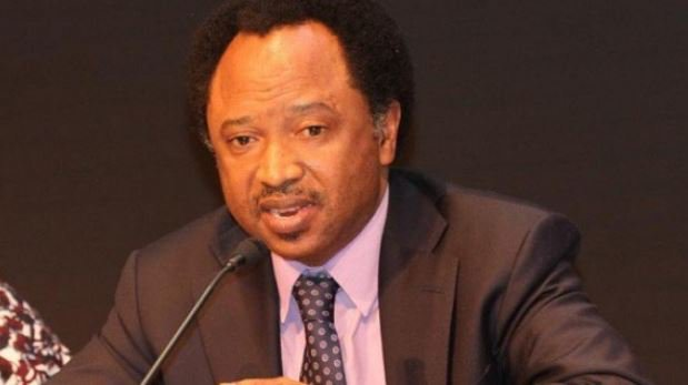 Shehu Sani: I Stand With Tinubu; No Automatic Ticket For Buhari