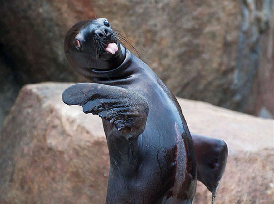 Смешной морской котик фото
