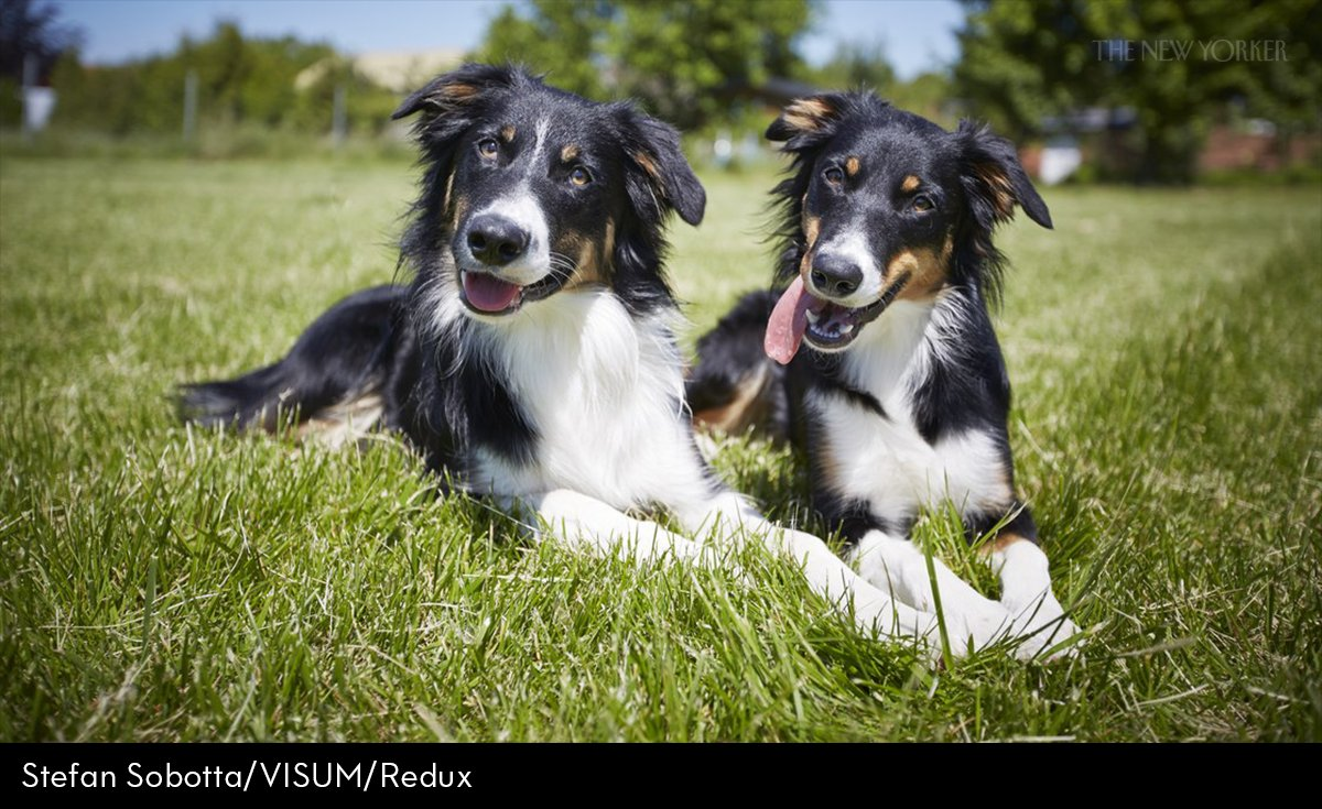 the new yorker on twitter inside the minds of very good dogs