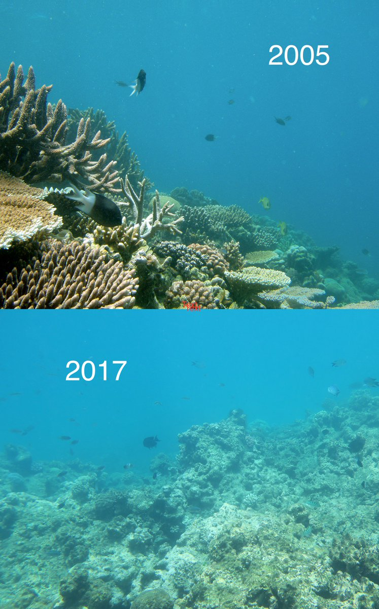 decline of coral reefs academic writing Ielts academic reading sample 61 - the coral reefs of agatti island details last updated: thursday, 08 december 2016 15:01 written by ielts mentor.