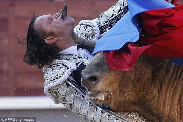 I'd rather you didn't 'fight' a bull in a ring, in front of a crowd of brain dead morons for so called entertainment, but if you insist, I hope it defends itself well, and wins. #BanBullfighting.