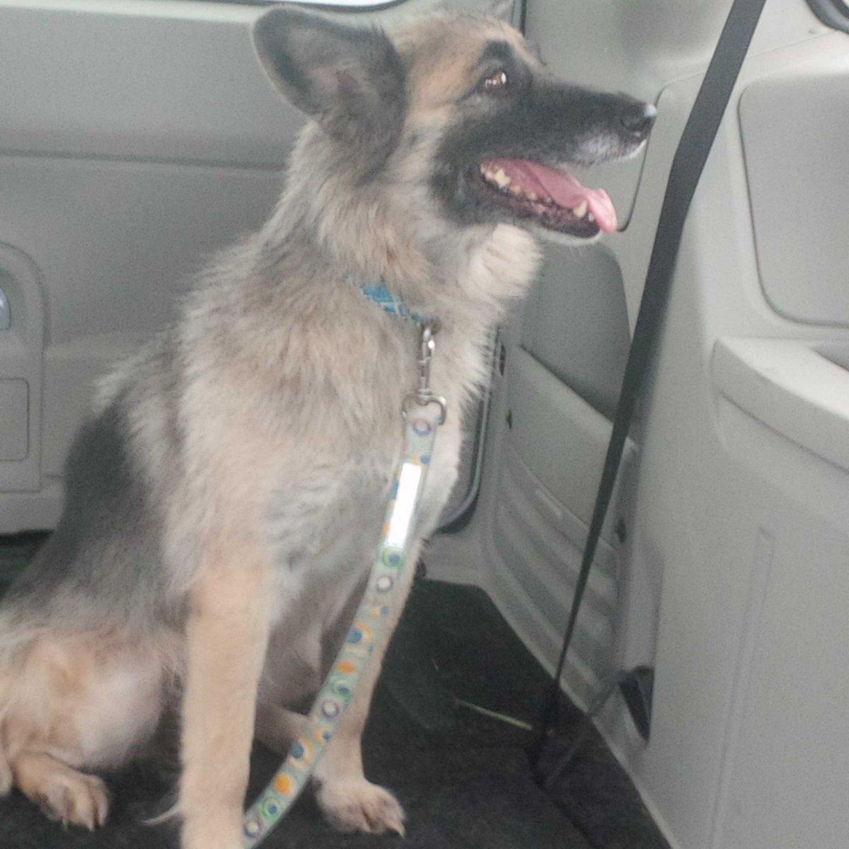 Pound Dog Rescue PoundDog911