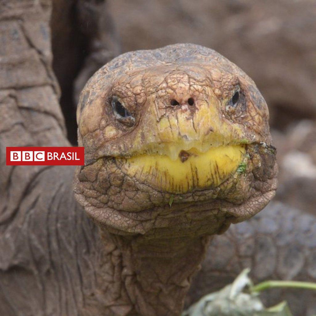 #ArquivoBBC De tanto acasalar, tartaruga centenária consegue salvar sua espécie da extinção https://t.co/z6LZxKDWwv