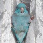 鳥も大好き、日当たりの良い窓辺😊。 pic.twitter.com/JwRlpvzxyp
