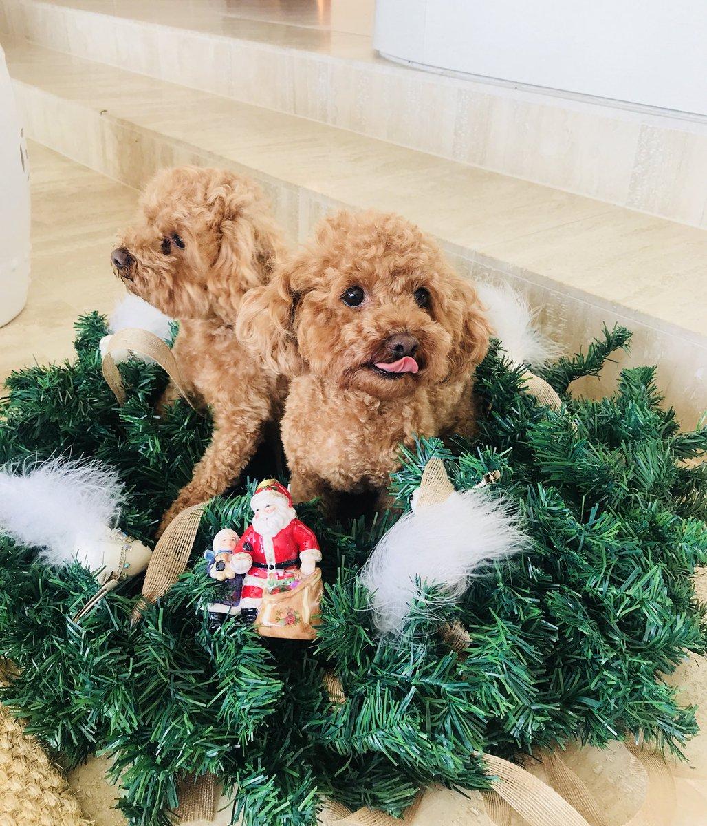 My puppies can already taste #Christmas...