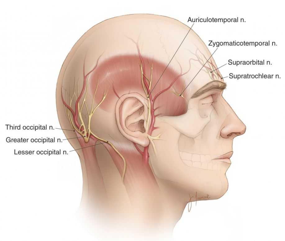 J Neurosurgery On Twitter Neurosurgicalatlas Relevant
