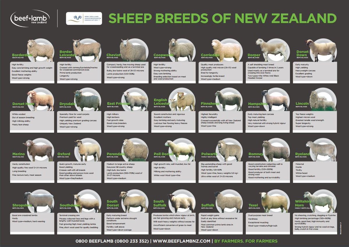 """Uživatel Beef + Lamb NZ na Twitteru: """"Following on from our"""