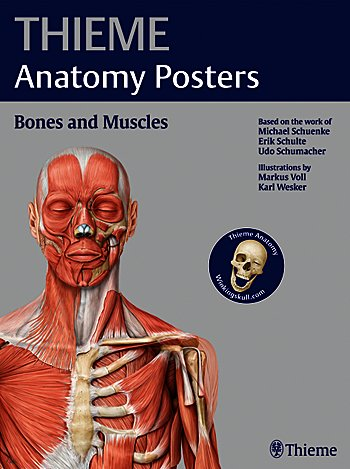 Thieme Uk On Twitter We Are Running Out Of Our Anatomy Posters