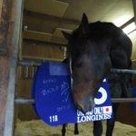 【14年ダービー馬 #ワンアンドオンリー 引退、種牡馬に】管理する橋口調教師が明かした。今後は北海道…